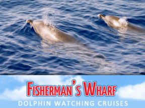 Fishermans Wharf Dolphin Watch Cruises