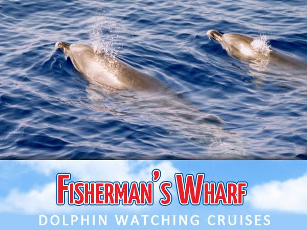 Fishermans Wharf Dolphin Watch Cruises